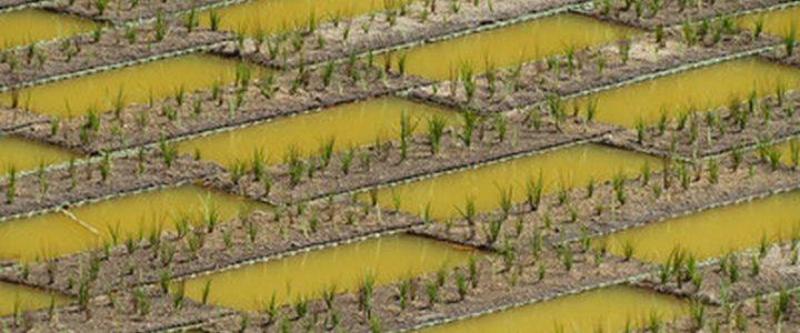 گیاه پالایی ,Phytoremediation، تصفیه فاضلاب به کمک گیاهان